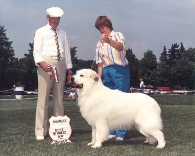 Champion Great Pyrenees at Stud